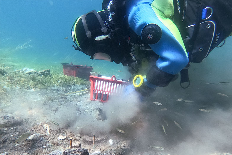 Diving and Sawing in the Bay of Bones